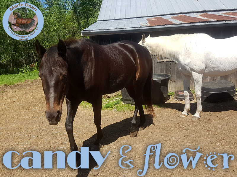 MARIE DEAN: CANDY AND FLOWER UPDATE
