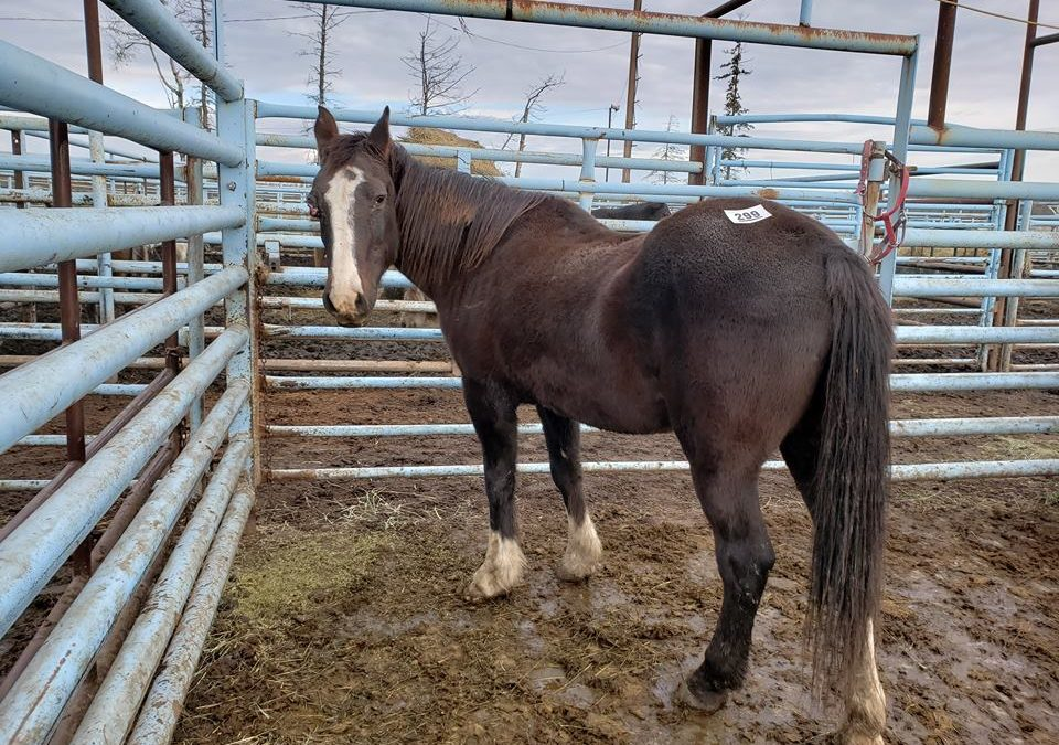TESTIMONIAL:  HUMANITY FOR HORSES RESCUE AND REHAB