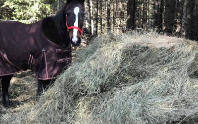 TESTIMONIAL:  MOLLY THE STANDARDBRED